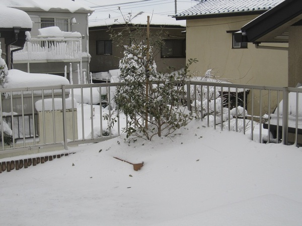 2014大雪.jpg