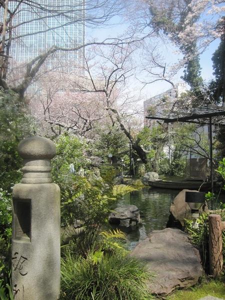 池の桜.jpg